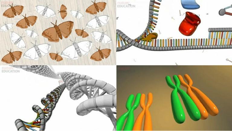 As animações produzidas e disponibilizadas pela Nature Education tratam de temas como seleção natural, replicação de DNA, comparação de genomas e divisão celular. (imagens: reprodução)