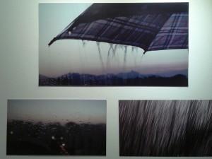 A importância da chuva. Foto: Luciana Rodrigues/Revista Biblioo